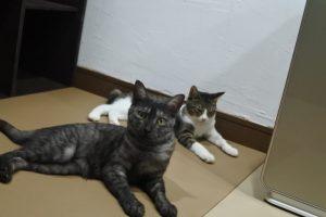 ヴィヴィ&ニンジン-1