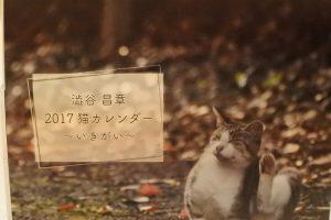 澁谷カメラマン-1